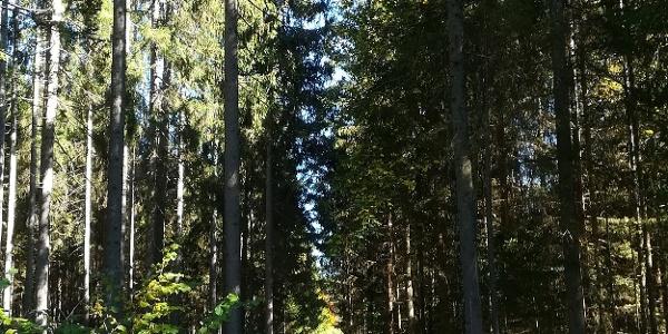 Waldweg am Birnberg