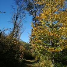 Erdei ösvényen