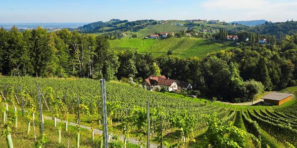 """Immer wieder bieten sich wunderschöne Ausblicke in die """"Steirische Toskana"""""""