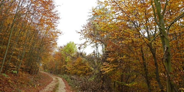 Herbst am Aufstieg zum Waxenberg