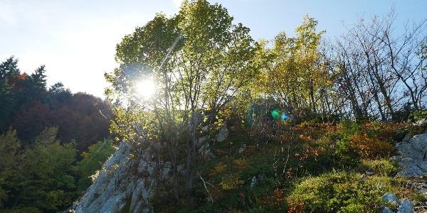 Natur pur am Ziel des Klettersteigs