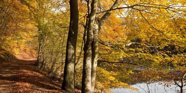 Man hat das Gefühl, von der Schönheit der Natur schier geblendet zu werden.