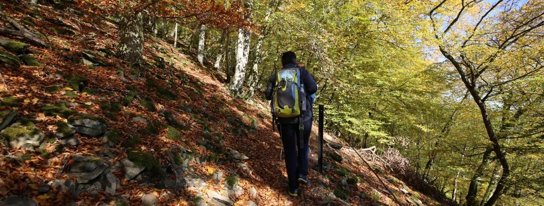 Herbstliche Wanderstimmung auf schmalen Pfaden am Urwaldsteig Edersee