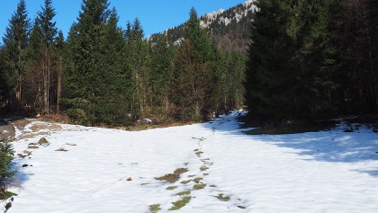 Kaltau 1070 m 5-10 cm Schnee