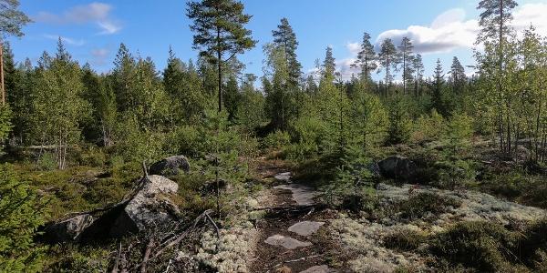 A photo of a slightly rockier area of the Bergö hiking trail