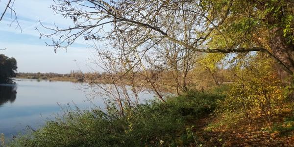 Pfade an der Donau