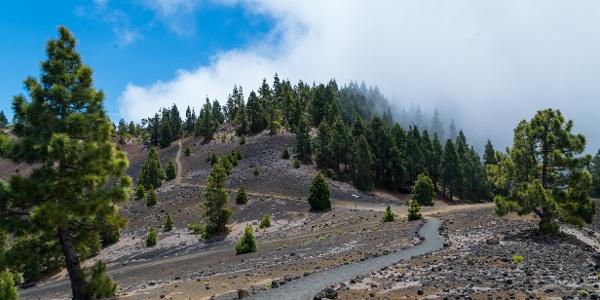 Paths on the Ruta de Los Volcanes trail