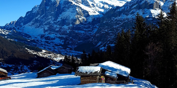 Schneeschuhwandern über Grindelwald.
