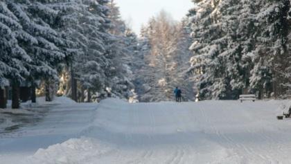 Waldschneise Benneckenstein