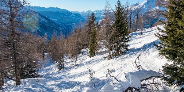 Schneeschuhlaufen Rosswald