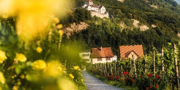 Blick von der Hofkellerei auf Schloss Vaduz