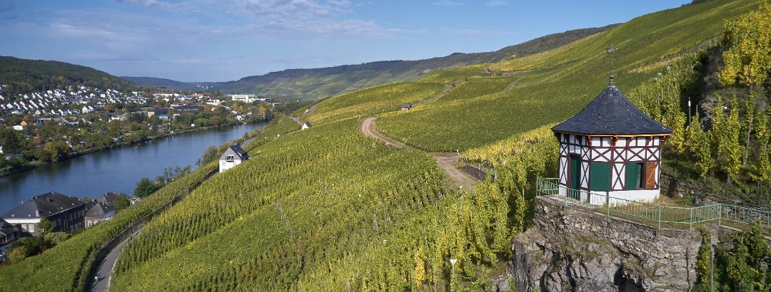 Les vignes autour de Bernkastel-Kues
