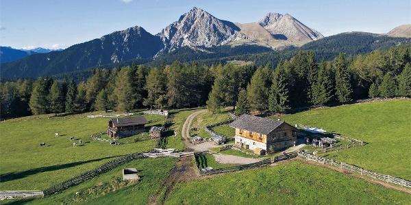 Wurzer Alm in Hafling, Südtirol