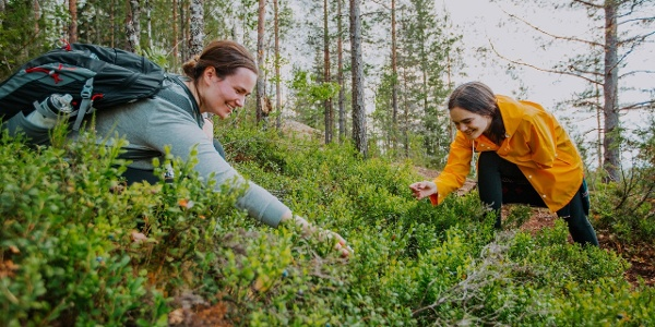 Berry-picking in Finnish nature. Beeren sammeln in der finnischen Natur. Marjanpoimintaa Suomen luonnossa.