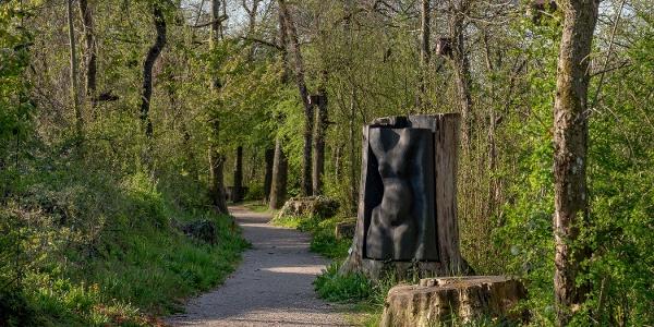 Pappelskulpturen am Rheinufer