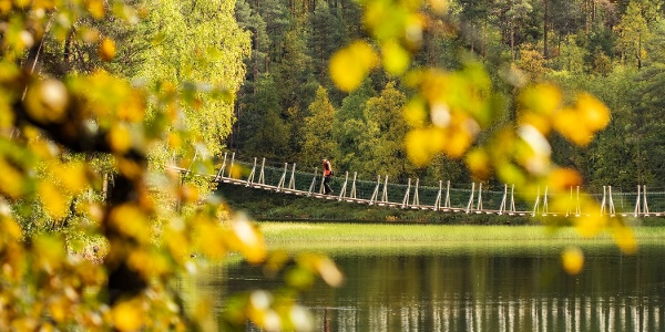 Harrisuvanto hanging bridge during autumn season, Oulanka National Park