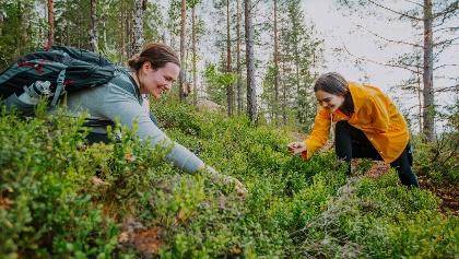 Beeren pflücken auf der Finnischen Seenplatte