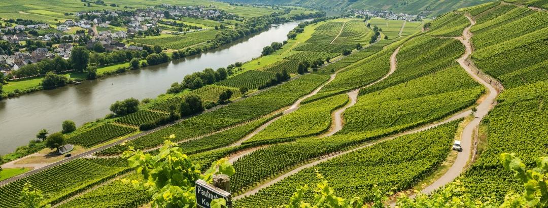 Moselsteig: Blick über die Weinbergsterrassen im Moseltal