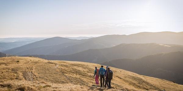 Wandern am Alpannonia Weitwanderweg - Pfaffensattel