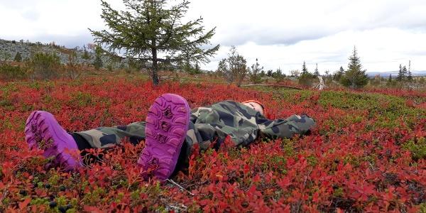 Red carpet in Tuntsa Wilderness in Salla