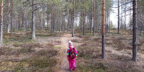 Ämmin Polku in Sallatunturi is easy route and suitable also for children.