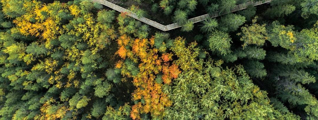 Tahkovuorelle johtavat portaat