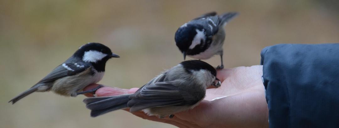 Vögelfüttern im Val Roseg