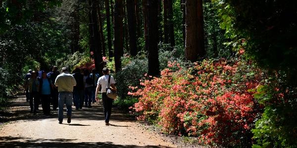 Jeli Arborétum