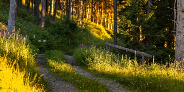 Wandern am Alpannonia Weitwanderweg