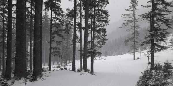 Am Weg zur Loibersbacher Höhe