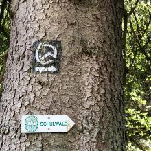 Schulwald Wiederstein