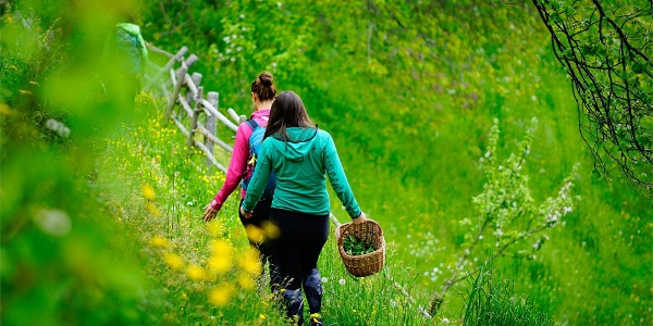 Herbal trail