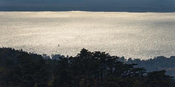 Mediterrán szilánk - fenyők kornyadoznak a napos Balaton fölött (Berzsenyi-kilátó)
