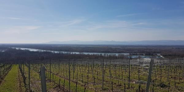 Blick auf den Rhein und ins Elsass