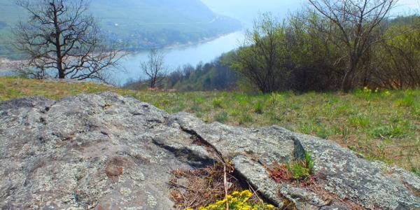 Hoch über der Donau verläuft der traumhafte Welterbesteig durch die Wachau
