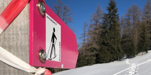 On the Blaswald Trail