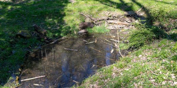 Amphibienteich im Eichbachtal