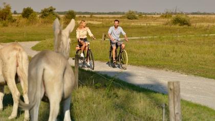 Weiße Esel am Lackenradweg