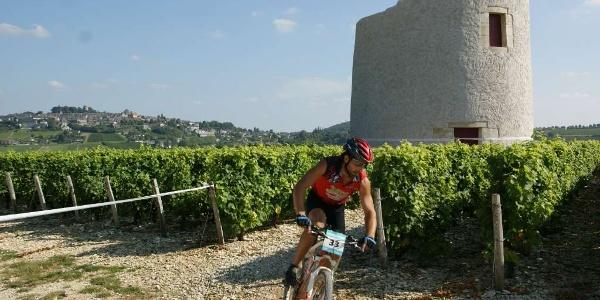 Circuit VTT n°42 - Vignes, Bocages et Bois