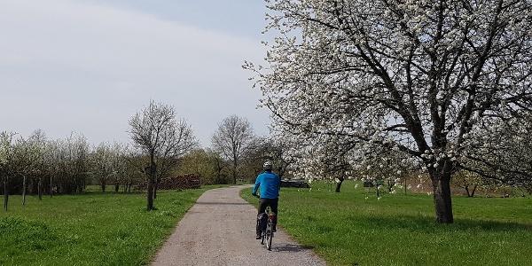 Radeln entlang von Streuobstwiesen bei Büchelberg