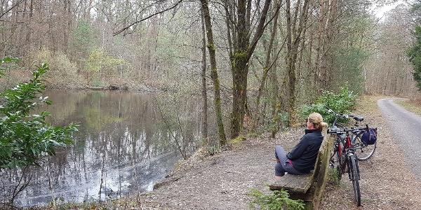 Rast am Mundatweiher im Bienwald