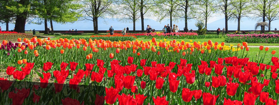 Tulpenfest in Morges.