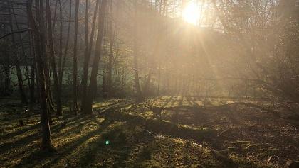 Morgenstimmung im Mühlbachtal