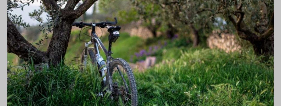 VTT dans les oliveraies