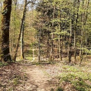 Erstklassige Huser & Ferienunterknfte in Niederhasli - Airbnb