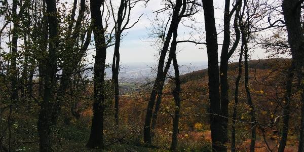 Blick vom Vogelsangberg über Wien