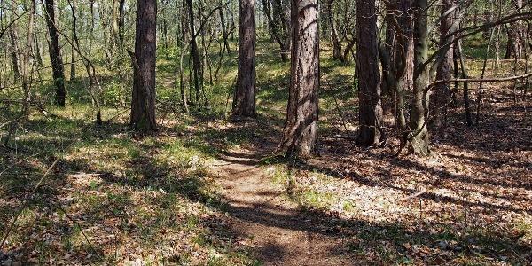 Romantischer, schmaler Waldweg vor dem Haasenbankerl