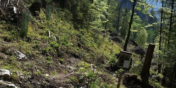 Vom Wanderweg die Abzweigung zum Klettersteig/ Zustieg