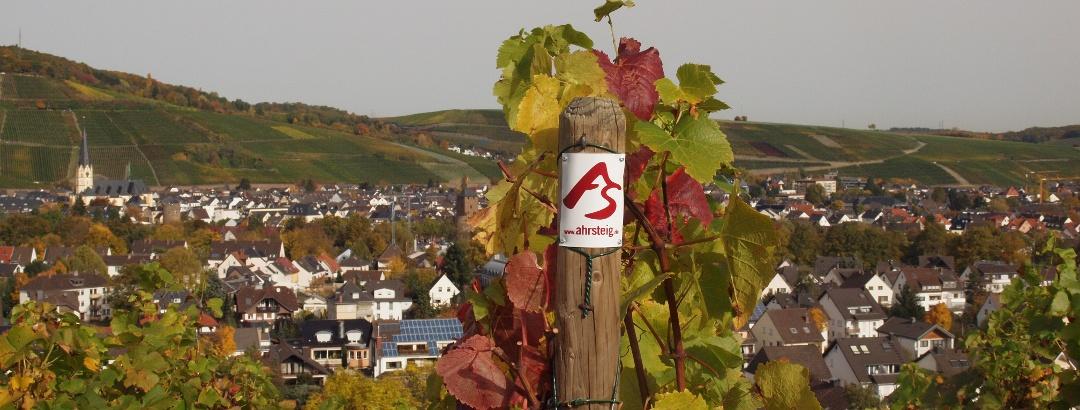 Weinberge bei Ahrweiler