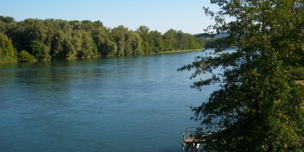 Aarezufluss in den Rhein
